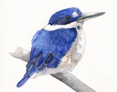 Kingfisher Painting -K038-  print of watercolor painting - 5 by 7 print
