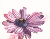 Daisy Painting - Print of Watercolor Painting A4 size wall art print - art print