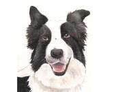 Border Collie - Pet Portrait Custom Painting - Dog