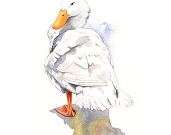 Duck Painting - nature wildlife art bird white -  print of watercolor painting  A4 print wall art print bird art - art print wildlife print