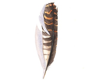 Feather Painting brown - print of watercolor painting 5 by 7 print