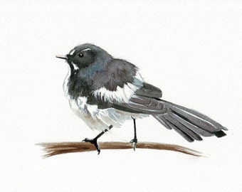 Willie Wagtail Painting Bird ART  print of watercolor painting wall art print - bird art print 5 by 7 size print