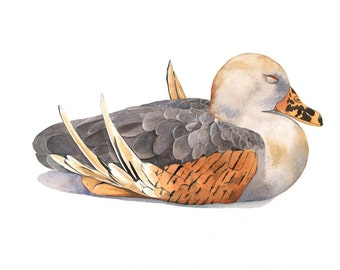Duck  watercolor painting - Print of Watercolor Painting A4 print wall art print - bird art - art print - wildlife print