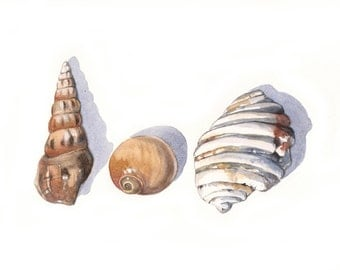 Seashells painting - S025-  Print of watercolor painting - 5 by 7 print