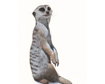 Meerkat Painting- M069- Print of gouache painting - 5 by 7 print