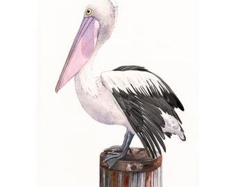 Pelican watercolor Painting  -P072- print of watercolor painting - A4 print wall art print - bird art print