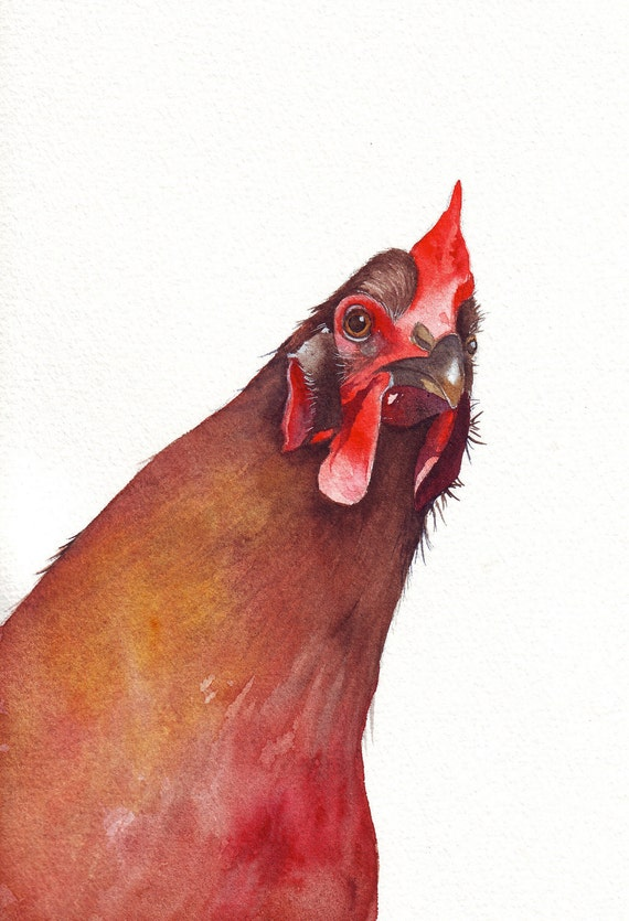 Chicken Painting - country rustic urban homestead natural decor -  Print of watercolor painting - 5 by 7 print chicken art bird art