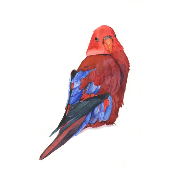 Parrot Painting -P036- Print of watercolor painting 5 by 7 wall art print - bird art print