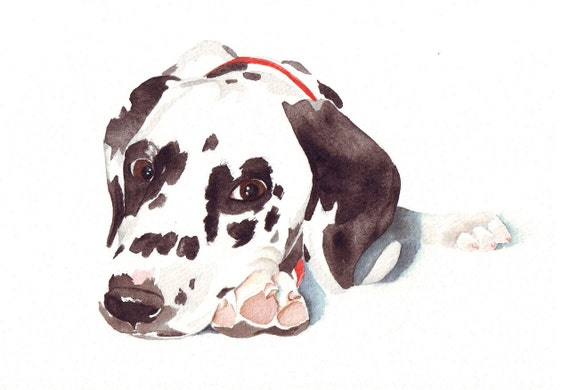 Dalmatian Dog Painting -  Print of watercolor painting 5 by 7 print