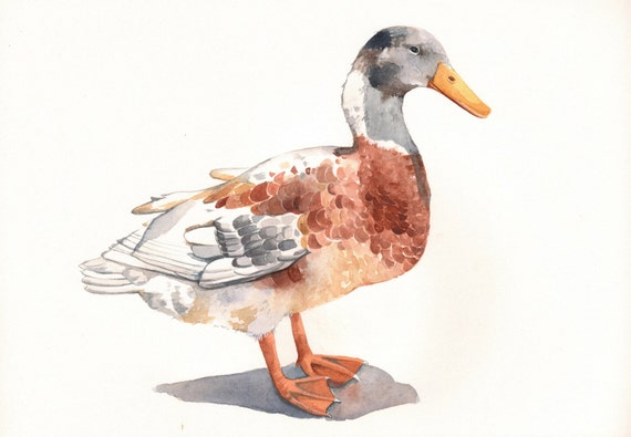 Duck painting -D068- PRINT of watercolor painting- A4 print