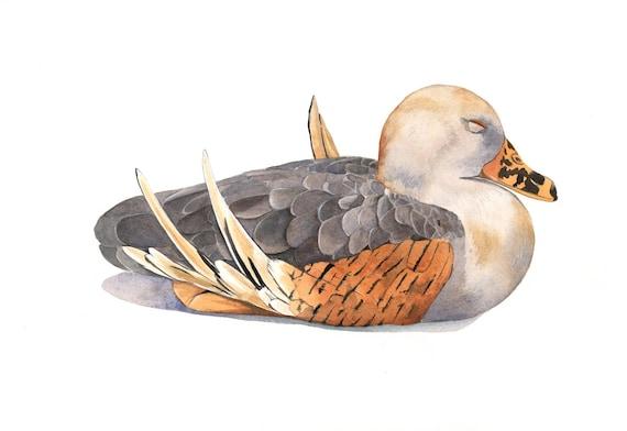 Duck painting  PRINT of watercolor painting - 5 by 7 print wall art print - bird art - art print - wildlife print