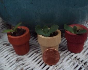 Live Succulent Plant Kit, Kalanchoe Plant And Planter, Miniature Fairy Garden