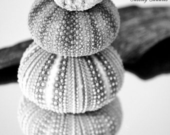 Black and White Beach, Sea Urhin Seashell Sea Shell, Beach Cottage Decor, Photography Art Print