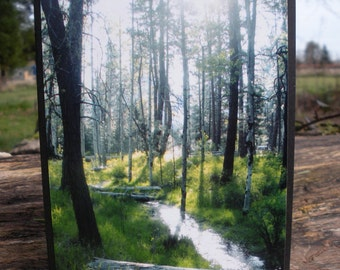Wooded Creek Photograph Greeting Card