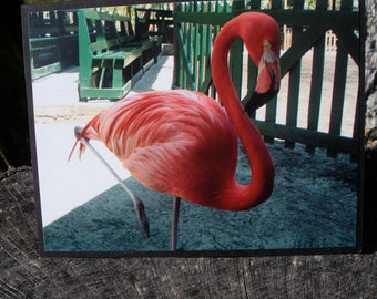 Bright Pink Flamingo Picture Card Blank