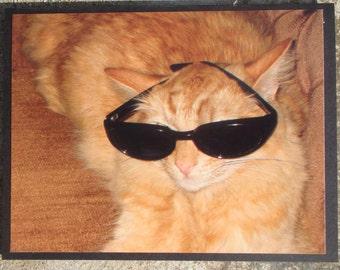 Orange Tabby Cat Wearing Sunglasses Blank Picture Card