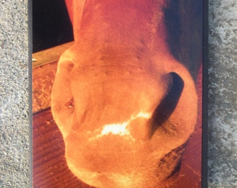 Horse Nostril Nose Muzzle Picture Card