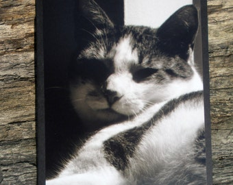 Cat in Shadows Black White Picture Card