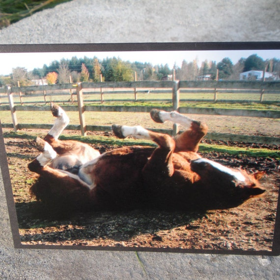 Chestnut Horse Rolling Picture Card