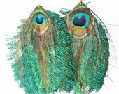 FOR JULIA Peacock Feather Earrings