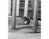 Photo - Black and White from Film - Squirrel