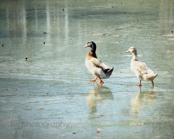 Winter Scene Mallard Ducks Pond Decor - On Frozen Pond - Ice Blue Frozen Water Ducky Print  - 8x10 Fine Art Photography