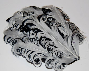 Curly Feather Pad -  Two Tone Off White on Black FP108  - (1 piece)