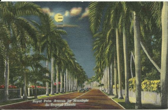 Vintage Linen Postcard - Night Scene - Royal Palm Avenue - Florida - Ephemera - 1950s - Tropical - Vacation - Travel Souvenir
