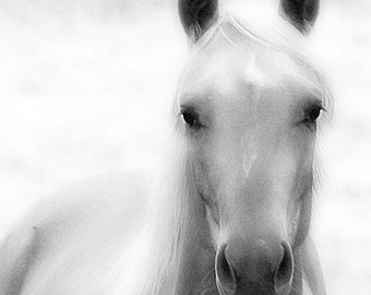 Black and White Horse Photography Print Angel