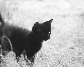 5 x 7 Black Cat Photograph