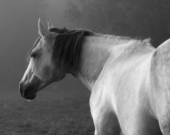 Gray Fog Black and White Horse Photography