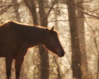Horse Photography Equestrian Fine Art Print