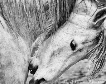 Black and White Horse Photography  Equine Art