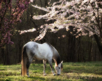 Horse Photography Equestrian Art Spring