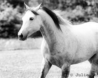 Horse Photography Black and White 8x12 Equestrian Art Print