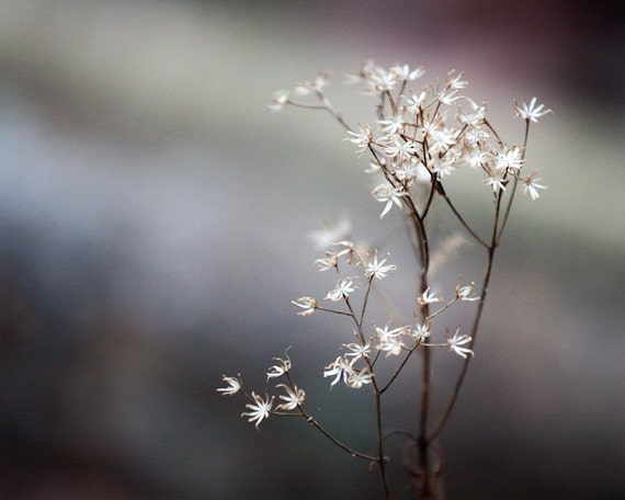 White Woodland Flowers Spring Nature Photography Print