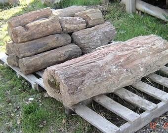 Petrified Wood  -24 - 400 Pound Pieces