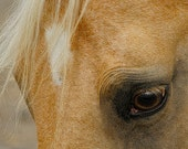 Horse Photography - Animal Photograph - Horse - Eyes - Beige - Farm - Country - Soul - Tan - Fine Art Photography - Art Print