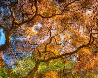 Dancing Branches, Nature Photography, Spring Tree, Fine Art Photograph, Tree of Life, Gold, Color, HDR, 16X24, Art Print