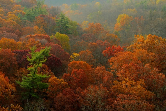 Autumn Foliage and Rolling Hills, Nature Photography, Landscape, Fall Color, Fine Art Photograph, Art Print, Home Decor, Zen, Rust