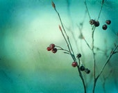 "Fine art photography, teal green turquoise aqua print nature colorful wall art branch photo, 16x20, 11x14, 8x10 Photograph, ""Winter's Chill"""