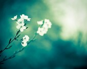 """Flower Photography - dark teal green white nature decor spring photo turquoise floral branches wall art, 11x14, 8x10 Photograph, """"Longing"""""""