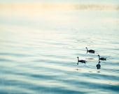 "Fine Art Photography - ocean photography ripples sea birds light blue beach seashore coastal wall prints - 8x10 Photograph, ""Out for a Swim"""