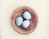 "Egg Nest Photography, robins eggs in a nest blue brown beige pale still life spring photography cottage 10x10, 8x8 Photo, ""Robin's Nest"""
