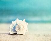 "Beach Photography, seashell conch shell print aqua blue white beige seashore ocean sea coastal wall art, 20x24, 24x30 Photograph, ""Paradise"""