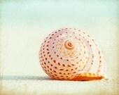 "Sea Shell Photography - seashell photo beach wall art white pastel peach neutral cream shore - 11x14, 8x10 Photograph, ""Seashell Voices"""