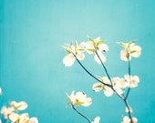 """Aqua Photography - blue decor spring dogwood blossoms flowers white teal wall art floral photo prints branch nursery photograph, """"Delicate"""""""