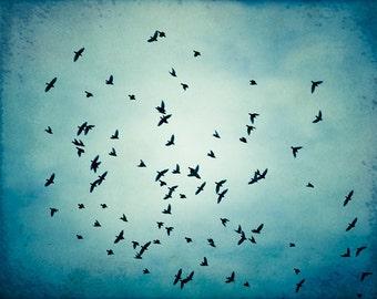 "Fine art photography - bird blue wall art print nature flock of birds flying photo black modern decor - 11x14, 8x10 Photograph, ""Swarm"""