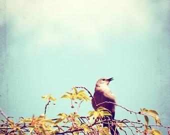 """Bird Photography - bird wall art nature - light aqua blue brown - nursery art print - fine art photography - 8x8 Photograph, """"Spring Song"""""""