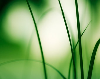 "Abstract Photography, green grass nature modern print spring photo white botanical colorful wall art, 11x14, 8x10 Photograph, ""Natural Flow"""